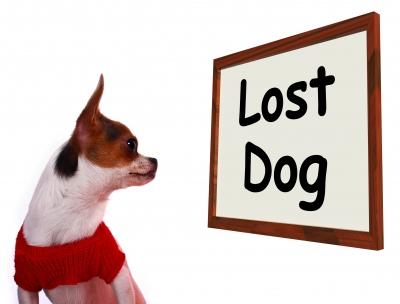 lost pet by stuart miles and freedigitalphotos.net.jpg